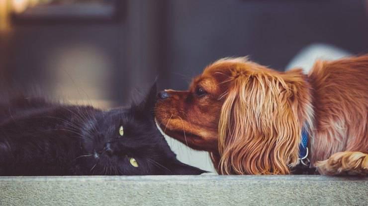 cane gatto vivere ecologico animale domestico
