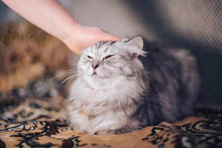 Come e dove non accarezzare il gatto