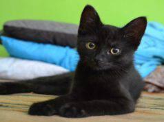 Gatto nero porta sfortuna