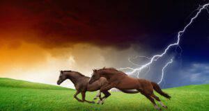 I cavalli sono meteoropatici? (Foto Adobe Stock)
