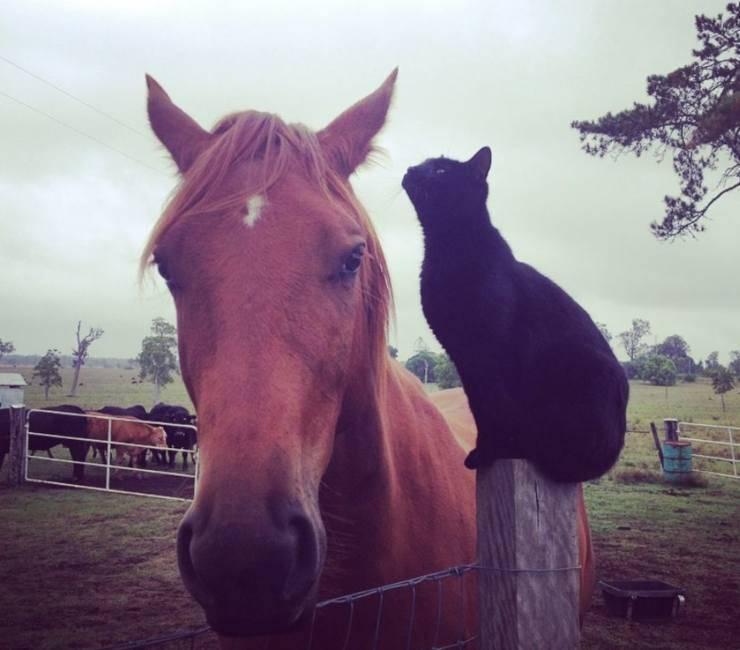 gatto e cavallo amicizia