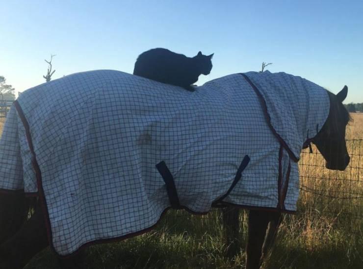 cane e cavallo amici