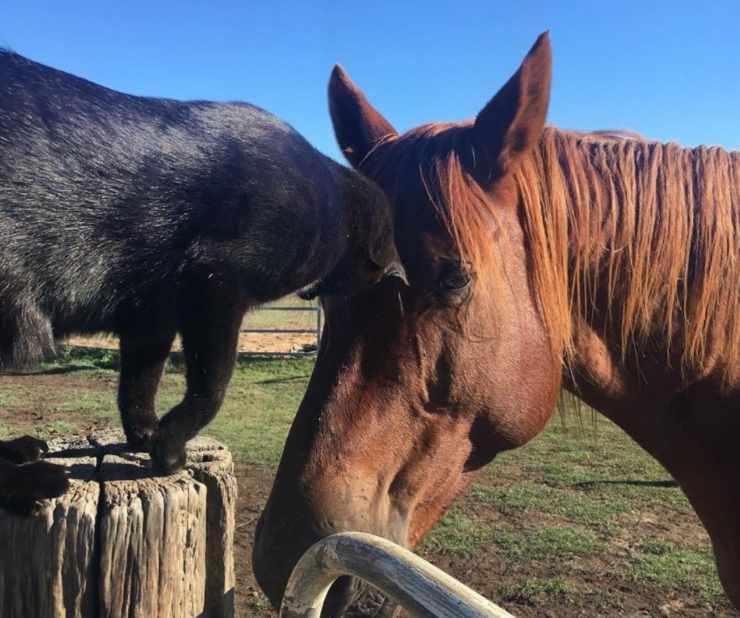 gatto e cavallo amici