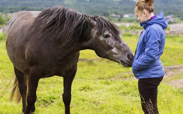 cavallo con donna incinta