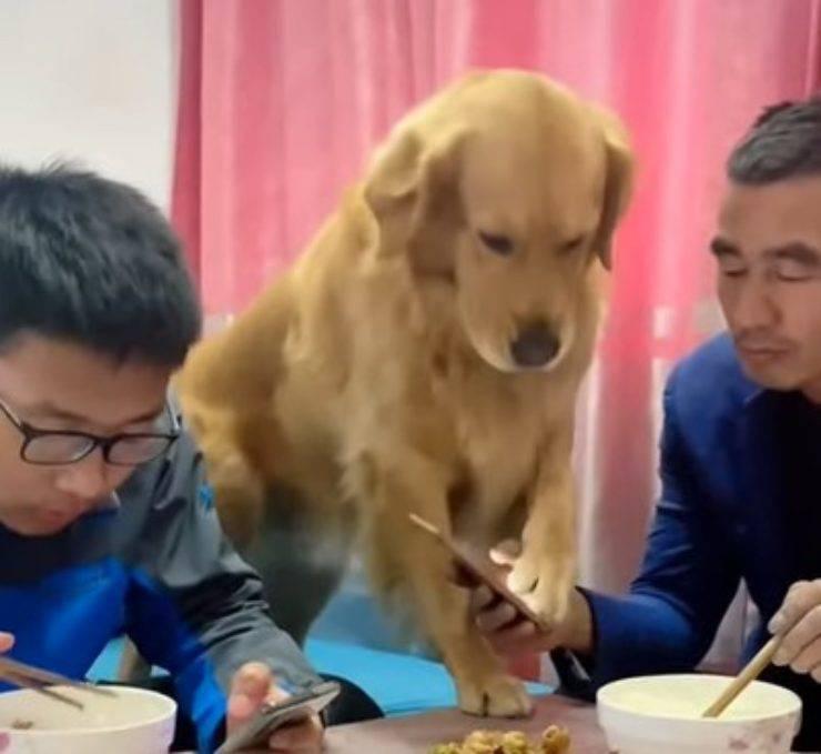 cane no telefono tavola