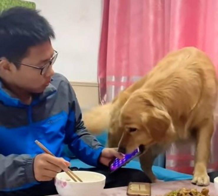 cane no cellulari tavola