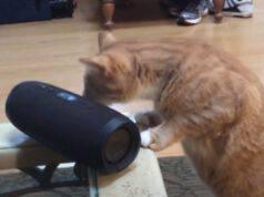gattino cieco musica