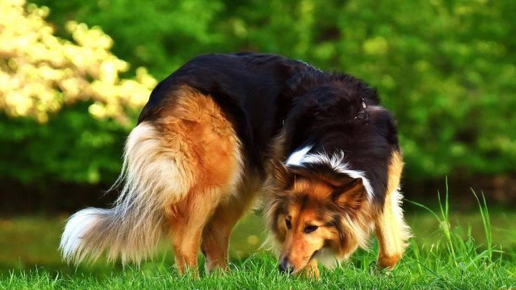 Il cane si strappa il pelo