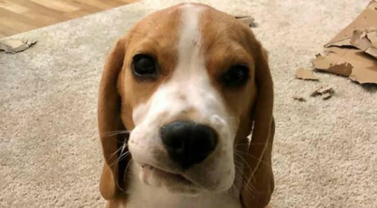 Il cane infastidito (Foto Instagram)