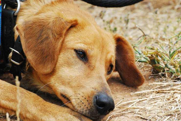 cane legato palo pieno centro