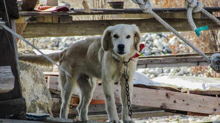 cane legato palo messina