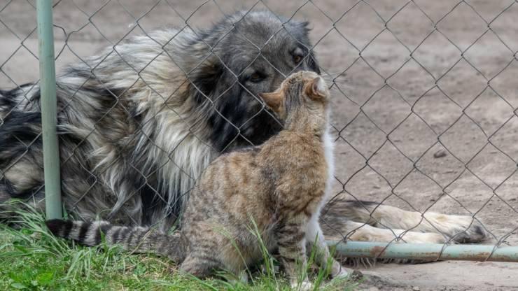 amicizia moralità animali cane gatto