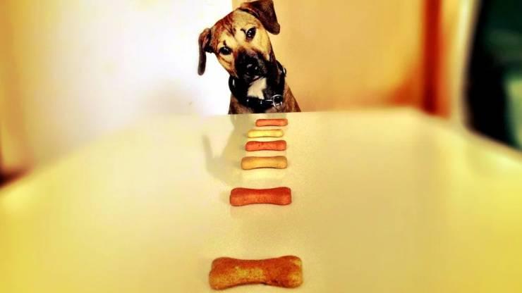 premi al cane quando diventano un problema