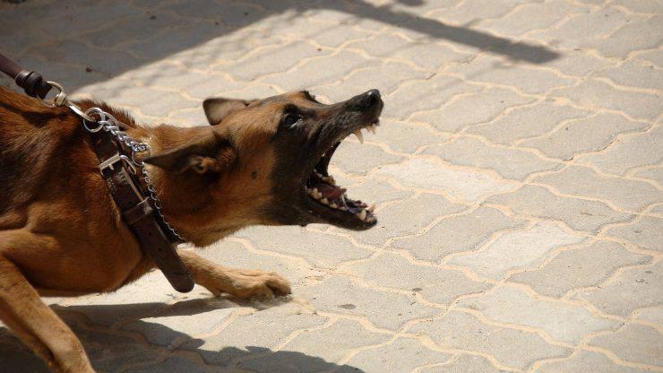 cane aggressivo contro altri cani