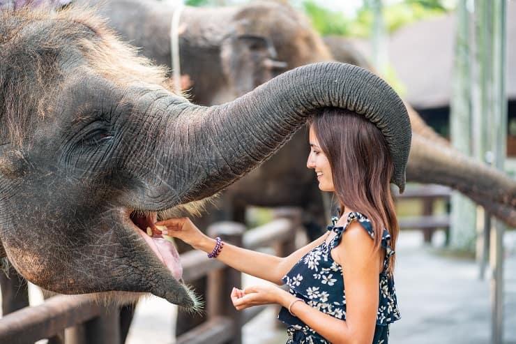 elefante gentile ragazza