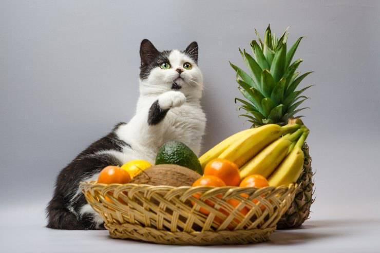 frutta per il gatto