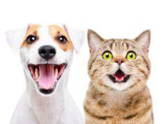gatti che si comportano come cani