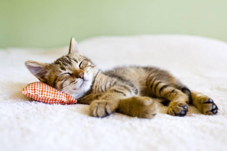 gatti dormiglioni