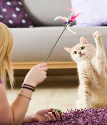 Le tipiche mosse del gatto che gioca (Foto Adobe Stock)