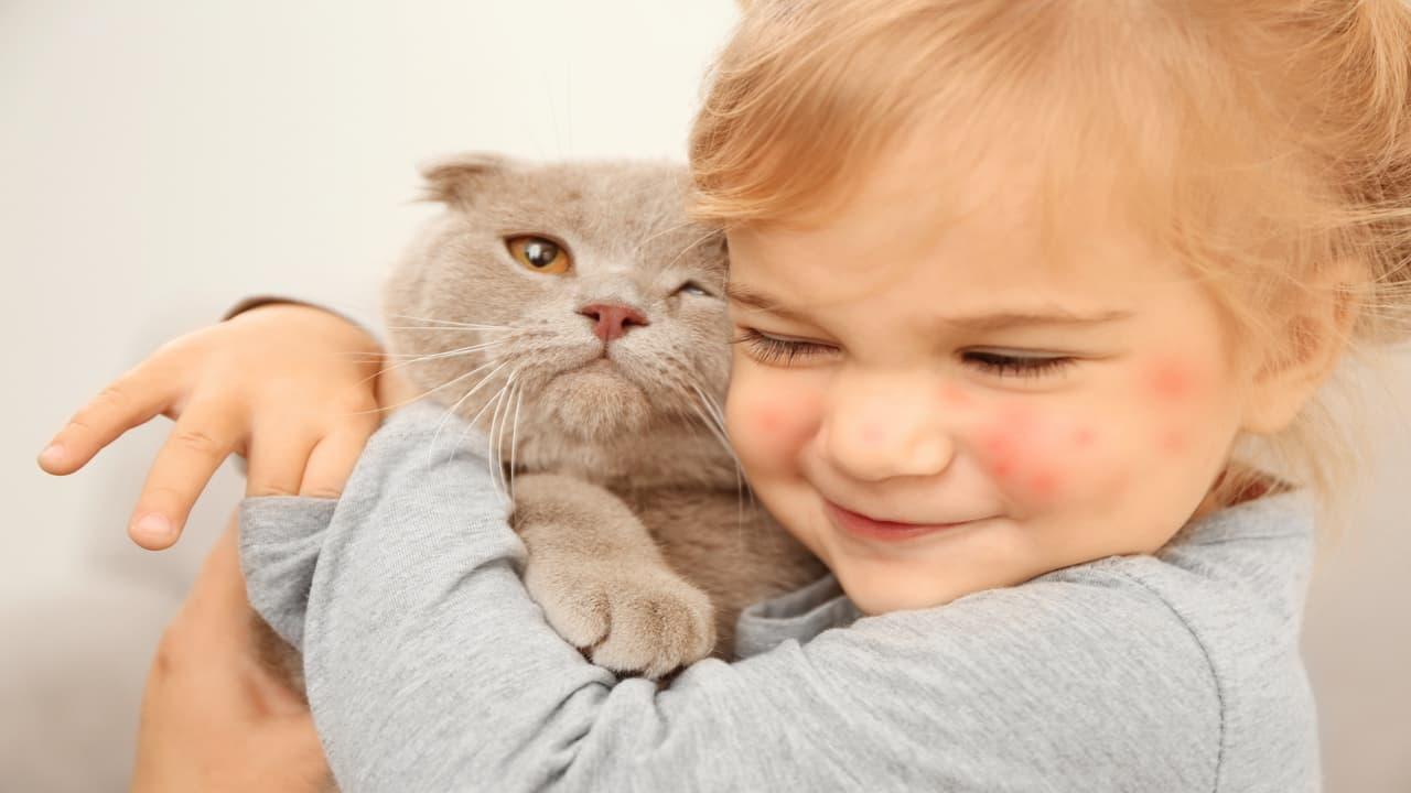 Il gatto può entrare in ospedale? (Foto Adobe Stock)