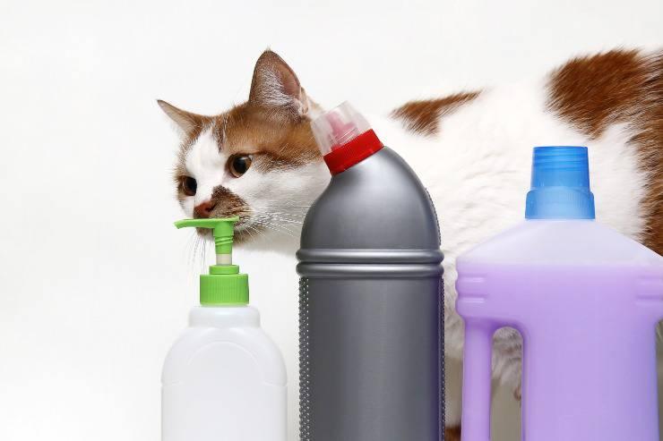 gatto e candeggina