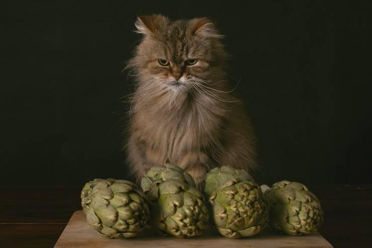 il gatto può mangiare i carciofi