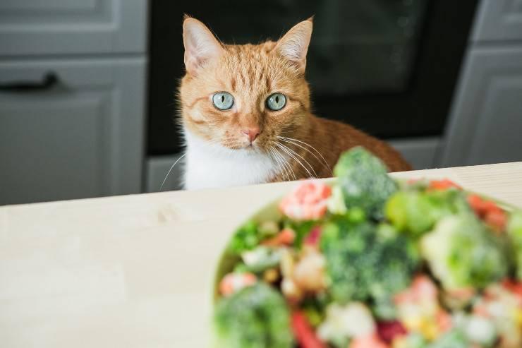 gatto può mangiare i cardi