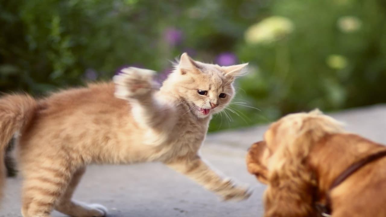 Gatto graffia occhi del cane (Foto Adobe Stock)