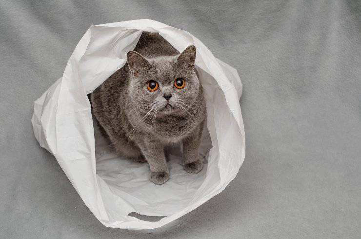 sacchetto di plastica e gatto