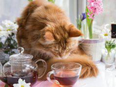camomilla per il gatto