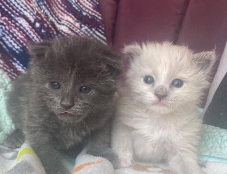 gattine orfane salvate strada