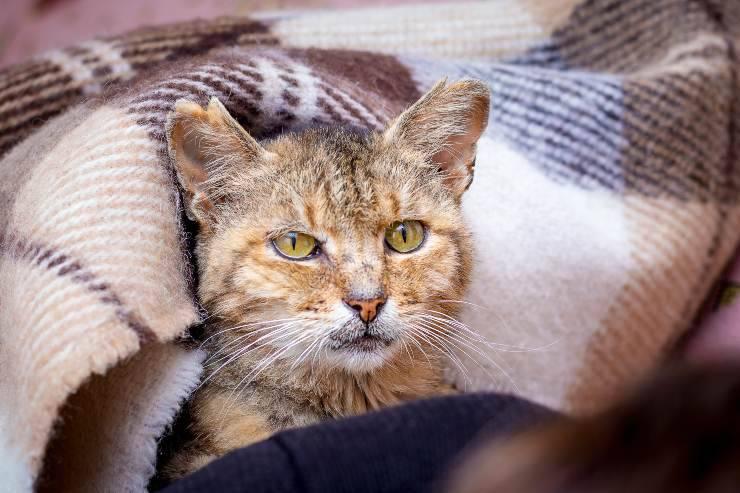 gestione gatto
