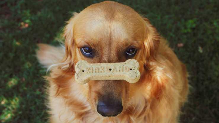 Il cane e l'osso (Foto Pixabay)