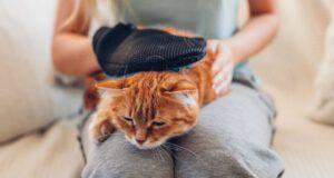 guanto per gatto