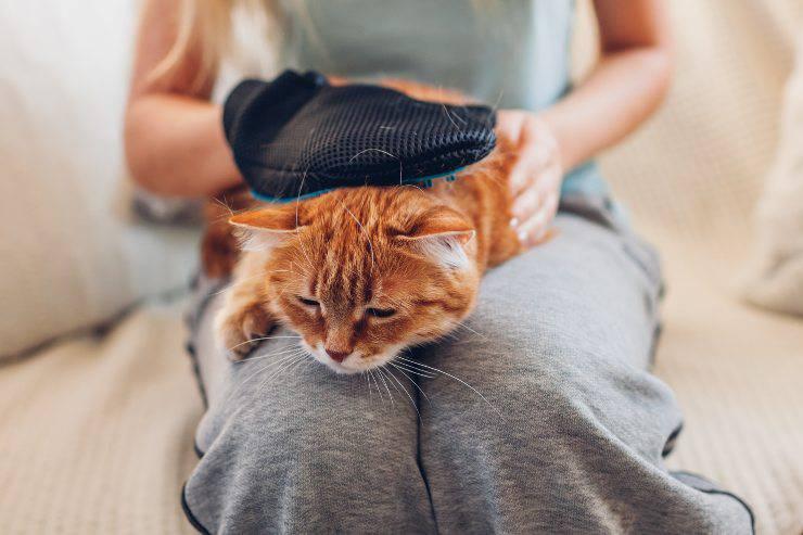 guanto per spazzolare il gatto