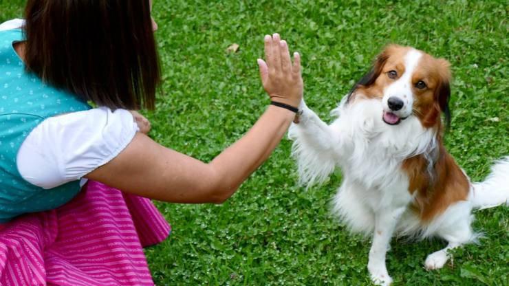 cane riconosce padrone colore occhi