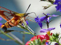 Farfalla e falena