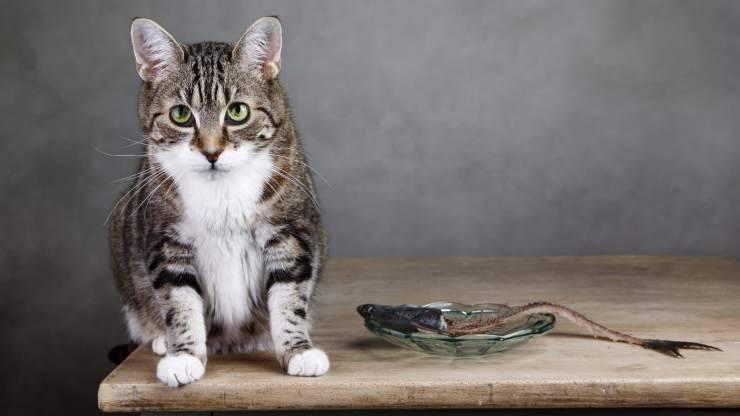 i gatti mangiano le lische di pesce