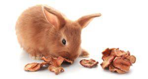 il coniglio può mangiare la frutta secca