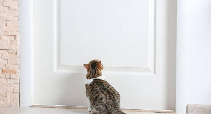 il gatto piange davanti alla porta