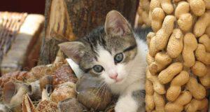 il gatto può mangiare le arachidi