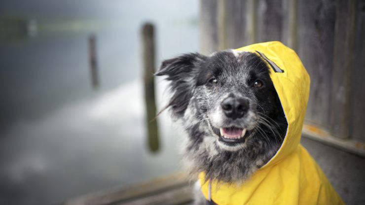 impermeabili per cani