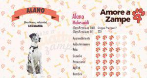infografica cane alano new