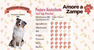 infografica cane australian shepherd new