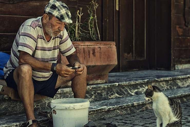 Gatto in Turchia