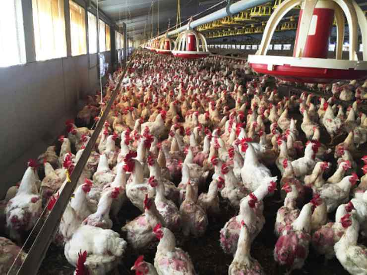 antibiotici animali