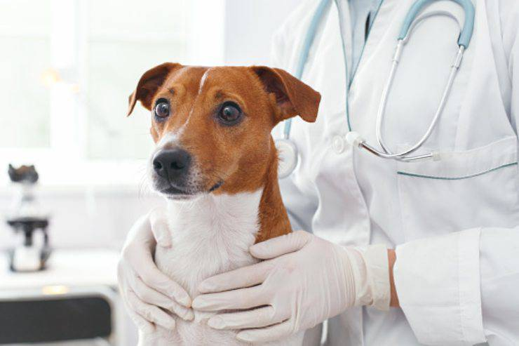 antibiotici veterinari