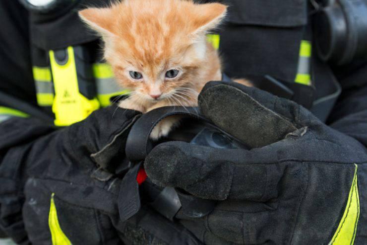 gatto salvato 100 ore turchia