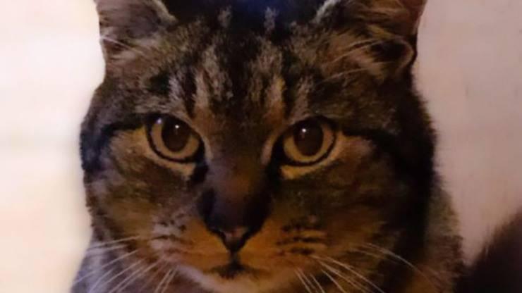 morto gatto katia fanelli
