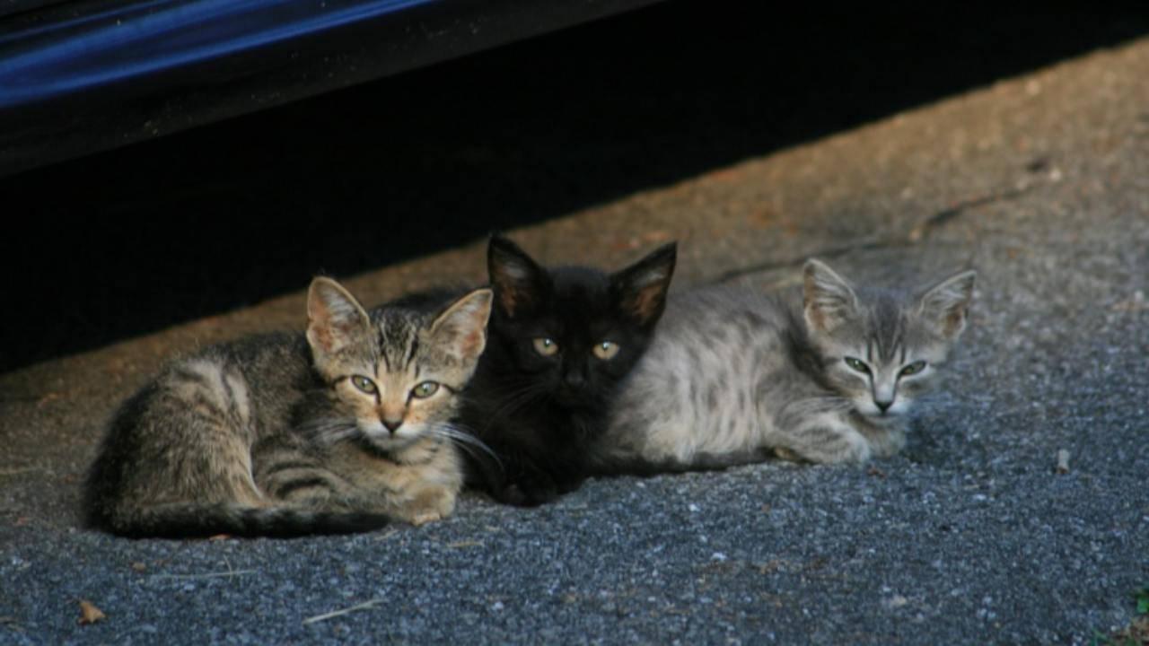 gattine sorelle strada